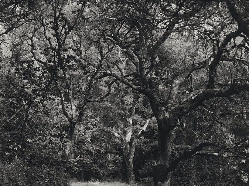 Ghost Road Iii The Memory Of Trees Lod C Wynn Bullock